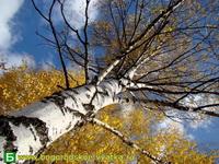 Октябрь  2009 в п Богородское