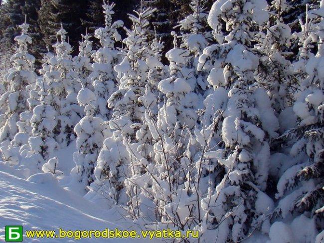 Зима. 17 января 2010 года в окрестностях п. Богородское