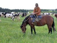 В «Русиче» - единственном сельхозпредприятии п. Богородское.