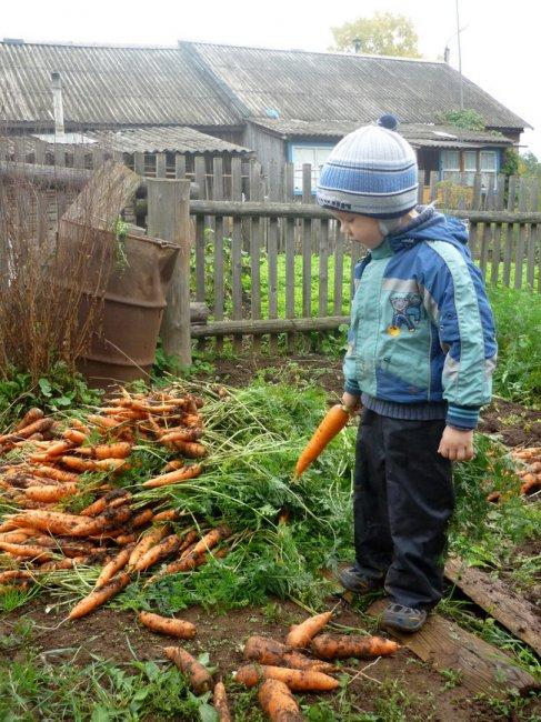 Лето клонится к закату: рви морковь и сей салаты!