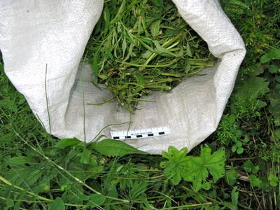 Кировские наркополицейские изъяли более 9,5 кг. наркотиков за сутки.