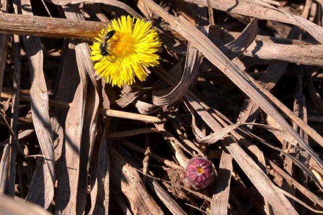 Весна на Пелевском пруду. Фотозарисовка.