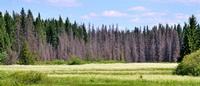 С 18 июня в лесах Кировской области вводится особый противопожарный режим