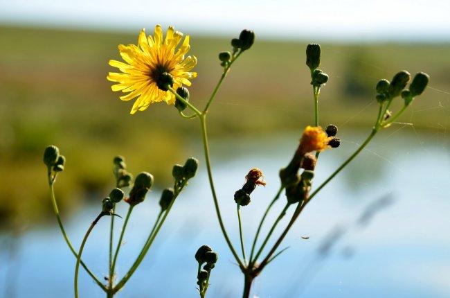 Август — месяц все еще летний, но, увы, в числе летних он последний.