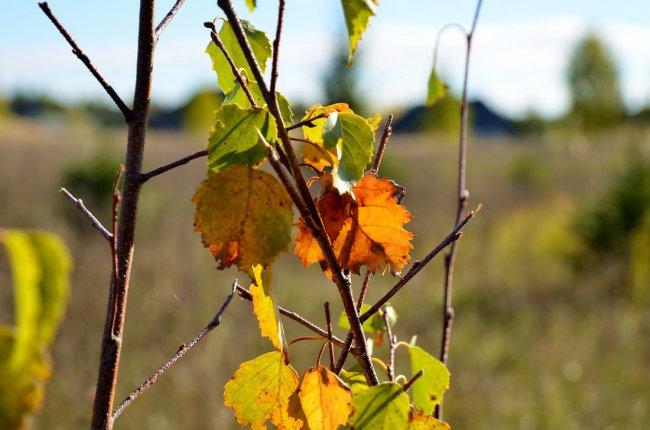 Что ты рано в гости, Осень, к нам пришла? Еще просит сердце Света и тепла!