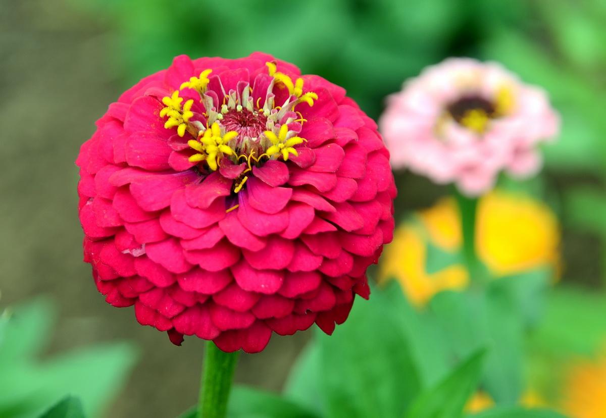 Цветы очаровательные