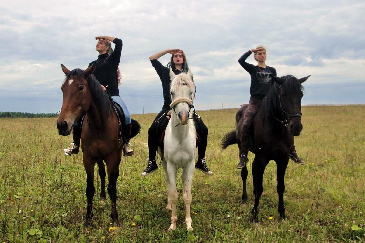 Домашняя лошадь — Википедия   800x1200